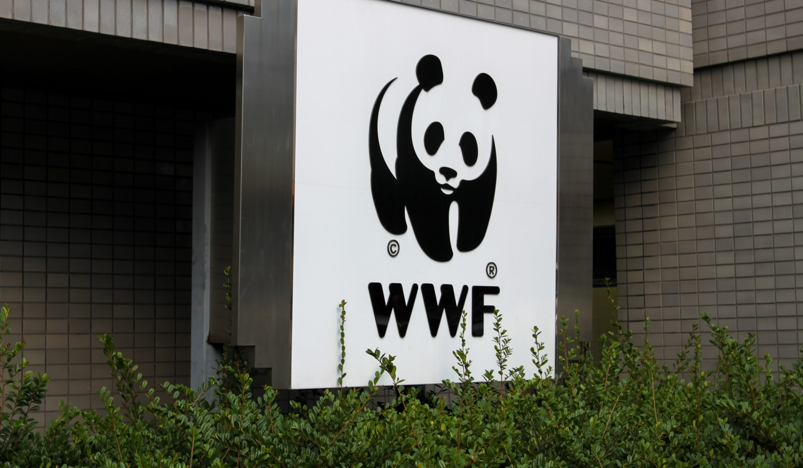 wwf france lfp interview